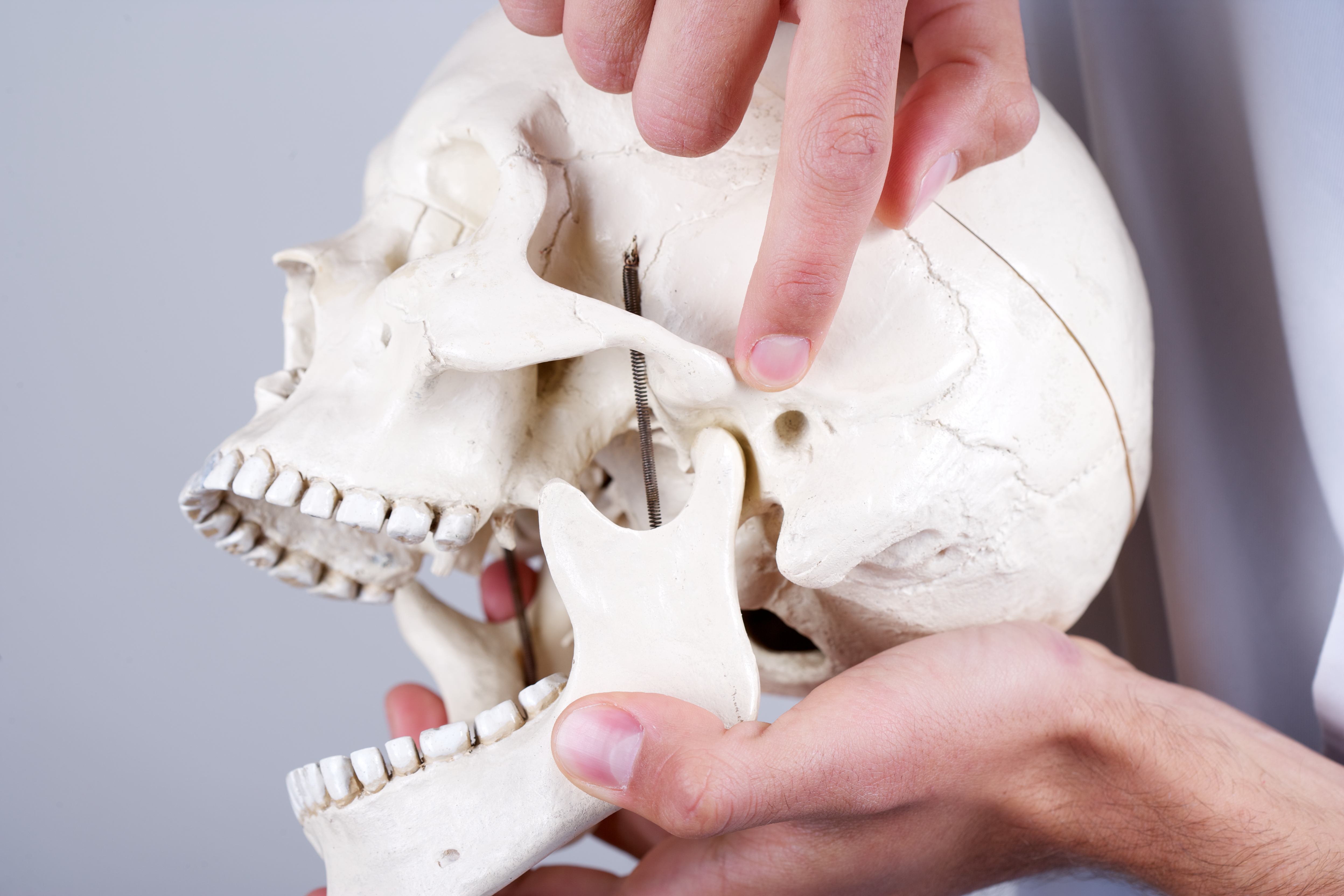 Doctor holding a synthetic skull and pointing at temporomandibular joint (articulation temporomandibularis).